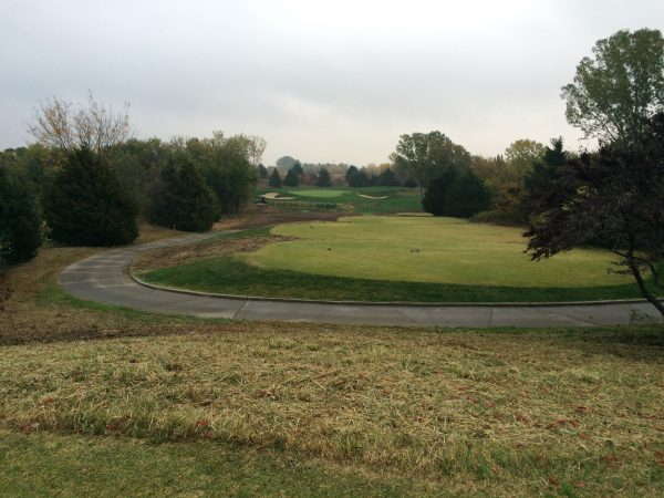 #4 after tree removal and native management practices.